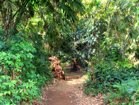 Alle jardin japonais best jardin japonais with alle for Allee jardin japonais
