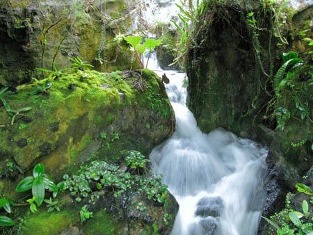 Cascades du jardin du singapore botanical garden les plus belles cascades artificielles - Les plus belles jardins du monde ...