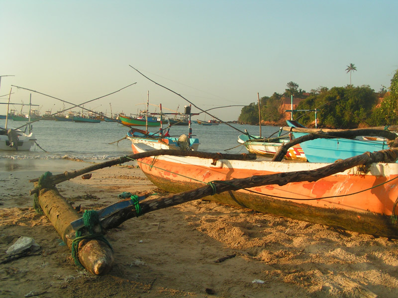 Index of image sri lanka guide sri lanka fishing for Sri lanka fishing